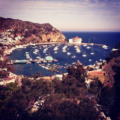 Catalina Island was a stop on a cruise with our church friends.  It rained the whole day so we took a dry bus tour of the island.