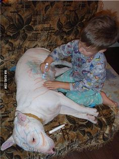 This is why you do not leave a bull terrier and a child unsupervised.