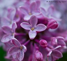 Flowers leave some of their fragrance in the hand that bestows them. ~Chinese Proverb