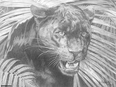 Black Panther Artwork by Joseph Bellofatto (c)2017  Graphite pencil on paper