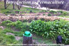 Permaculture (permanent agriculture) is an ethical, sustainable food system. Learn how one family is transforming their own land and helping to teach others