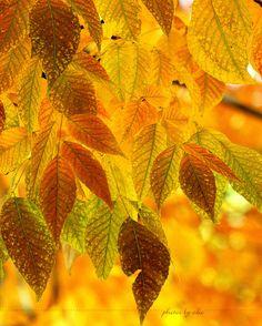 Autum Leaves by =1001G on deviantART