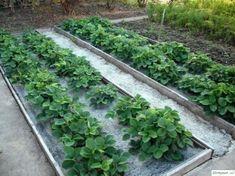 Landscape Design, Plants, Gardening, House, Sodas, Home, Landscape Designs, Lawn And Garden, Haus
