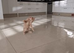 Funny Cat Gifs And Animations | gifopotamo.com