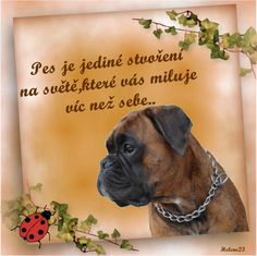 Boxer Dog Breed, Dog Love, Animals And Pets, Quotes, Quotation, Quotations, Quote, Manager Quotes, Qoutes