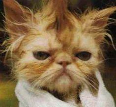 Kitty needs a brush