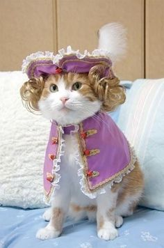You've somehow convinced yourself that dressing your cat in historical garb is a good idea. | 13 Signs You've Gone Too Far With Your Pet's Halloween Costume