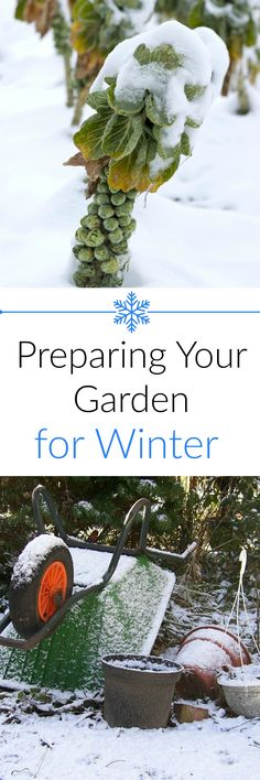 How to Prepare Your Garden for Winter