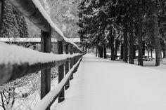 Snow by Lorenzo Refrigeri on 500px