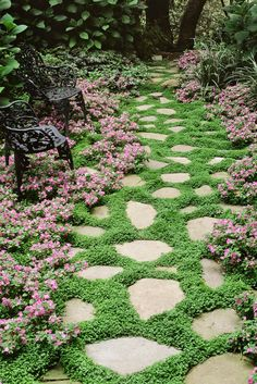 ground cover flowers drawf impatients