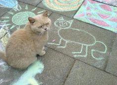 котэ,прикольные картинки с кошками,картина