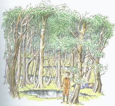 The Wood Between the Worlds from The Chronicles of Narnia, C.S. Lewis