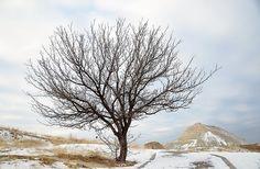 Tree, Winter, Nature, Snow, Frozen