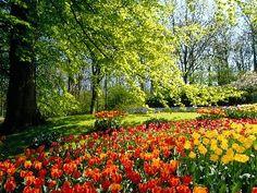 Jardín de Keukenhoff, Holanda