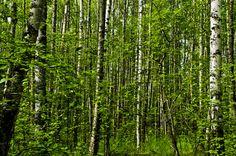 Spruce 3 by Wilkinswerks  on 500px