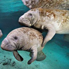Underwater Wildlife Photography by Brian Skerry #art #photography #Underwater Photography