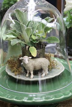 Brown Bunny Flowers: { DIY Terrariums and Cloches } Terrarium Diy, Glass Terrarium, Terrariums, Deco Floral, Bell Jars, The Bell Jar, Apothecary Jars, Lambs Ear Plant, Easter Centerpiece