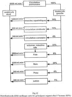 circulation systémique - Recherche Google