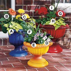 Painted Pots and planting Ideas