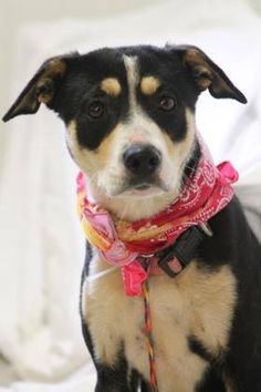 ADOPTED>NAME: Lulu  ANIMAL ID: 31023054  BREED: Retriever mix  SEX: female  EST. AGE: 1 yr  Est Weight: 34 lbs  Health: heartworm neg  Temperament: dog friendly, people friendly  ADDITIONAL INFO: RESCUE PULL FEE: $35  Intake date: 3/7  Available: 3/13