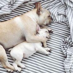 Instagram Love: Piggy & Polly