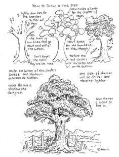How to Draw Worksheets for Young Artist: How To Draw A Nice Tree Worksheet.lots of neat drawing 'lessons'! Basic Drawing, Drawing Lessons, Drawing Techniques, Drawing Tips, Drawing Reference, Painting & Drawing, Big Tree Drawing, Rendering Techniques, Nose Drawing
