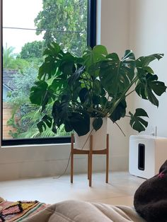 May your Monday be as successful as this Monstera's growth! Thanks to our customer Liz M. for sharing her Monstera's progress with us 😍 #monsteradeliciosa #swisscheeseplant #plantstylings Swiss Cheese Plant, Monstera Deliciosa, Plant Leaves, Mid Century, Plants, Plant, Planets, Retro