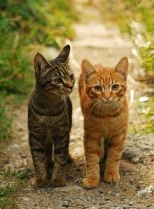 I was told by Sammy's former owner that his brother was a ginger tabby and they were inseparable as kittens.. :/