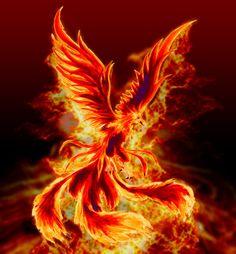 Phoenix Dragon, Phoenix Art, Phoenix Rising, Mythical Birds, Mythical Creatures Art, Fantasy Creatures, Fantasy Landscape, Fantasy Art, Tattoos On Side Ribs
