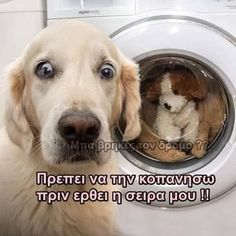 Funy Animals, Animals And Pets, Funny Greek Quotes, Verses, Dog Cat, Funny Pictures, Jokes, Funny Things, Cats