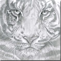 Tiger Greeting Card by British artist Sarah Boddy. Taken from an original pencil illustration and blank inside, this card is a striking choice for any occasion! Wildlife Safari, Safari Animals, Swinging Safari, Sending Hugs, Pencil Illustration, Watercolor Cards, Zebras, Animal Design, Lions