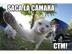 memes de Gatos enloquecen la Red.