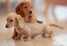 No obstante, ¿cómo sudan realmente los perros?