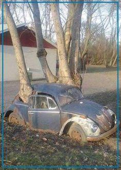 OH...schaut mal - ein VW-Baum   Euer Arnd von der AutoErlebniswelt-Tü Taunus