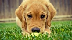 cute dog Images