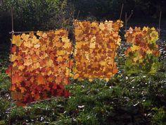 Landart,window art for fall time... kinda cool