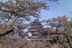 370:「青空に浮かぶお城と桜の対比が綺麗です。」@鶴ヶ城公園