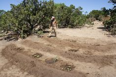Waffle Garden modification! High berms deflect the prevailing drying wind. Deep basins hold water where it is needed.
