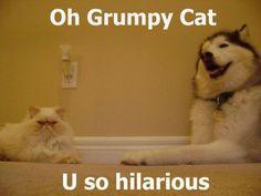 u so hilarious