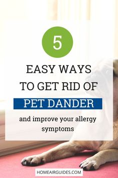 Allergies Remedies If you or someone in your home suffers from pet allergies, the breathing issues that come because of dander shed by your pet can be really hard to deal with. Here are 5 easy ways to get rid of pet dander to help relieve your allergies. Asthma Remedies, Allergy Remedies, Allergic To Dogs, Pet Shed, Kids Allergies, Asthma Relief, Pet Dander, Pet Odors, Dog Shedding
