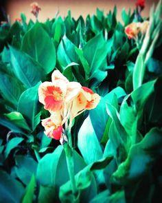 - Flowers on the road 2.0. . . . - Flores en el Camino .  #flores #flowers #sendero  #road #naturaleza #nature #fotografias #phothography #photographyeveryday #photographyislife #samsungs5  #malecón2000 #guayaquil #guayaquilesmidestino #floweroftheday #flowerlovers #plantas #plants #phonephotography #samsungs4
