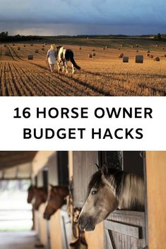 If you don& do it right, horses can be very expensive! But with a few tricks up your sleeve, you& be able to keep the costs of owning a horse low. Here are the best horse budgeting hacks. Horse Tips, My Horse, Dressage, Horse Information, Horse Facts, Equestrian Outfits, Equestrian Style, Equestrian Fashion, Equestrian Problems