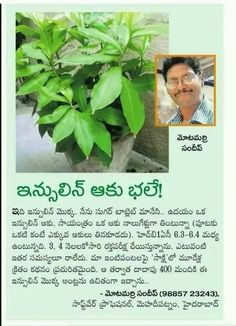 Saved by radha reddy garisa Health Facts, Health Diet, Health And Nutrition, Health Care, Health Fitness, Natural Health Tips, Natural Health Remedies, Health And Beauty Tips, Ayurveda Hair Care