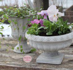 Drivhus - Greenhouse - Chic Antique - stedmoderblomster - Havets Sus - Grøn - Green - flowers - flower - blomster - spring