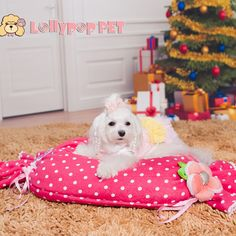 Nova chegada pet dot doces saco de dormir pelúcia kennel8 desfazer e lavar de cachorro pet fornecimentos em Produtos - Cachorros de Casa & jardim no AliExpress.com   Alibaba Group