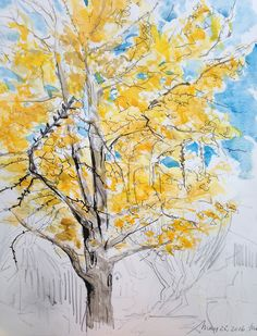 DAY 2   |   30 DAY SKETCH CHALLENGE The Gingko is Dying.   She has been battling on for the past two years and as I walked out the back door early this morning I thought this might be my last chance to watch that annual shower of leaves. But alas nearly the end of May and no frost. Too beautiful to lose:( Really hard to nail the unique butter yellow of her leaves. Blanket and cups of tea close at hand. Extra bonus on a cold morning.  #bathurst #sketchbook #sketch #watercolor