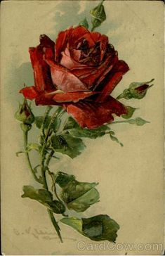 Red Rose C. Klein Flowers: