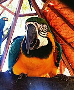 Parque Zoobotânico de Teresina .