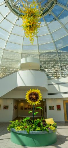 A look at our Welcome Center right now. Above is the Chihuly Goldenrod Teal and Citron, Chandelier; below, an 8 1/2 foot tall glass sunflower by Gary Guydosh. Photo © Paul g. Wiegman.