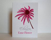 Pink Coneflower (Echinacea) – 3-color Letterpress Card, Blank